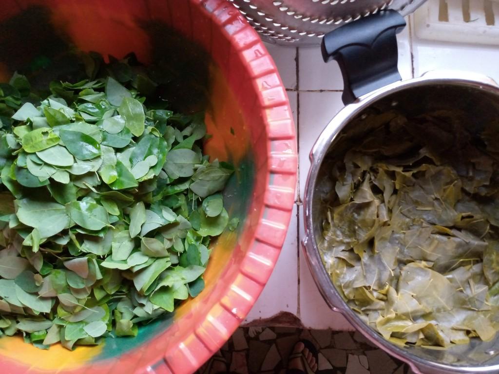 verse en gekookte bladeren van de Moringa stenopetala