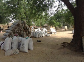 Sowing Seeds of Change in the Sahel