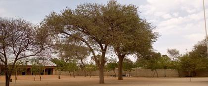 gao tree
