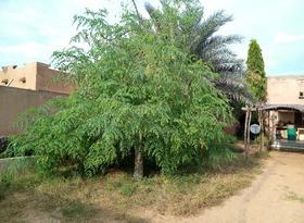 """De """"wonderboom"""" die ik vorig jaar in mijn tuin zette..."""