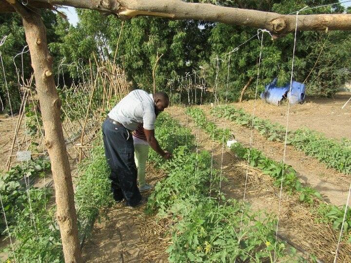 agrarisch onderzoek